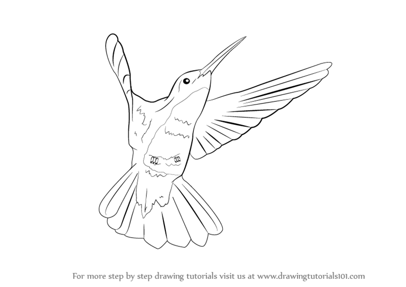 Line Drawing Hummingbird : Learn how to draw a hummingbird birds step by