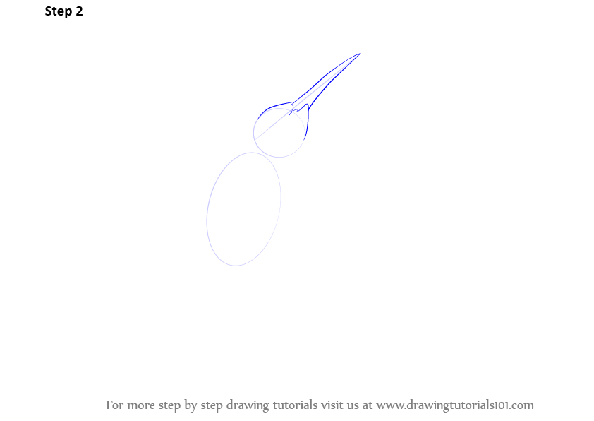 how to draw a hummingbird step by step