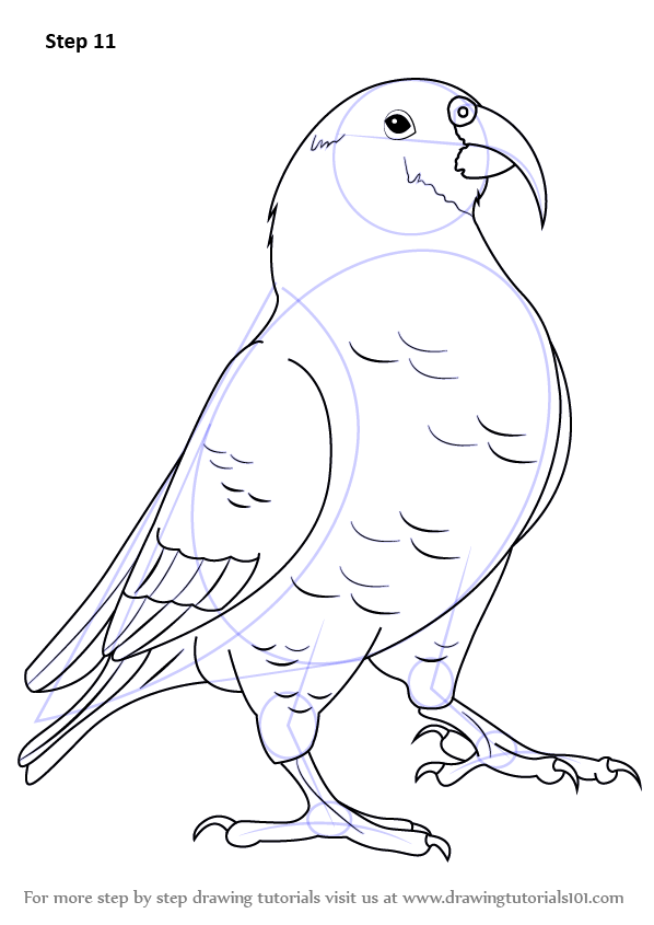 step by step how to draw a kea drawingtutorials101