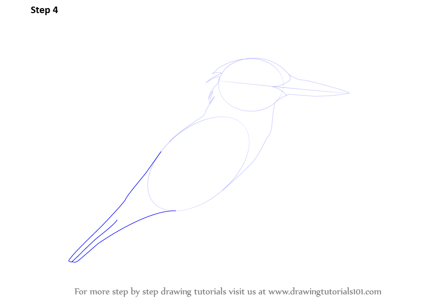 Learn How To Draw A Kingfisher Birds Step By Step Drawing Tutorials