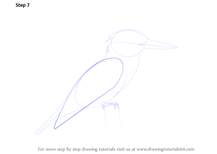 how to draw a kingfisher step by step
