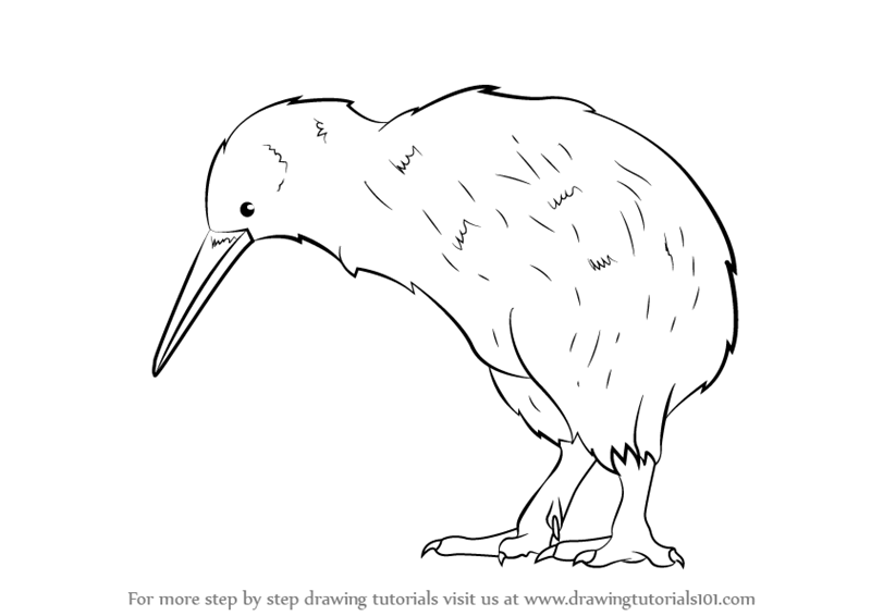 how to help kiwi birds