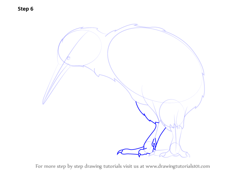 Learn How To Draw A Kiwi Birds Step By Step Drawing Tutorials