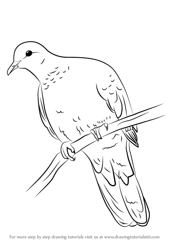 Learn How To Draw A Laughing Dove Birds Step By Step Drawing