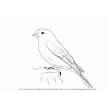 How to Draw a Lesser Redpoll