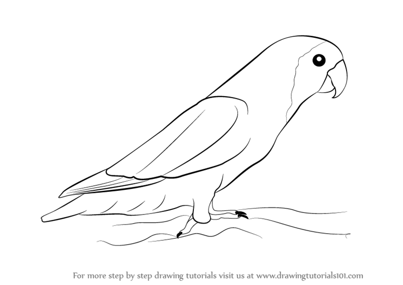 Learn how to draw love birds birds step by step drawing tutorials