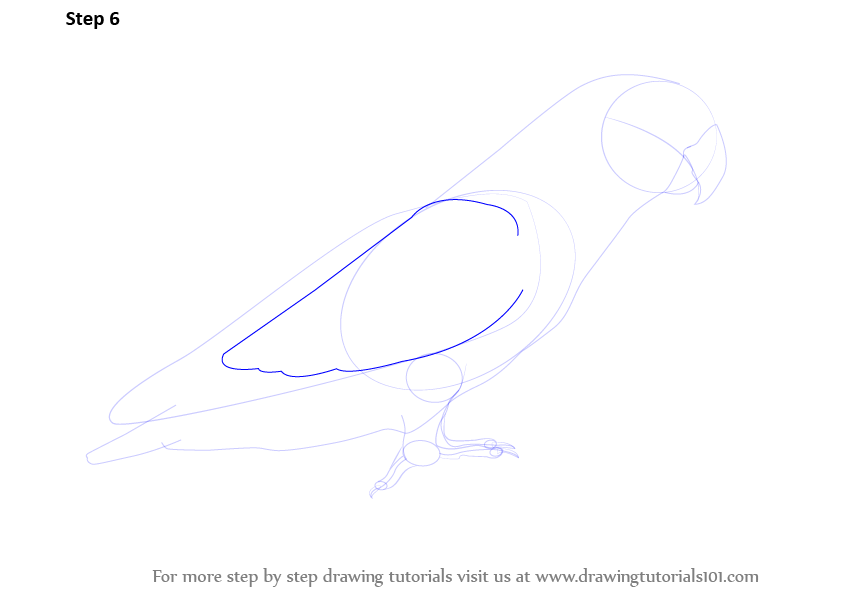 how to draw bird wings step by step