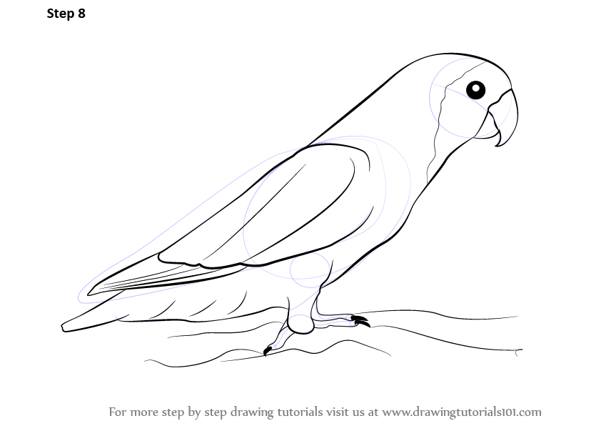 Learn How to Draw Love Birds (Birds) Step by Step ...