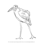 How to Draw a Marabou Stork