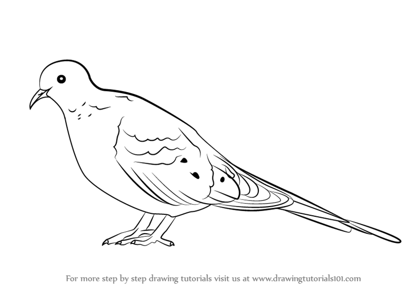 learn how to draw a mourning dove birds step by step drawing tutorials