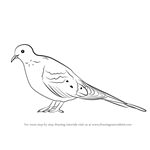 How to Draw a Mourning Dove