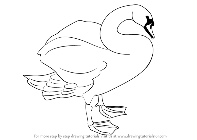 learn how to draw a mute swan birds step by step drawing tutorials
