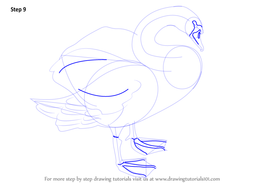 how to draw a swan head