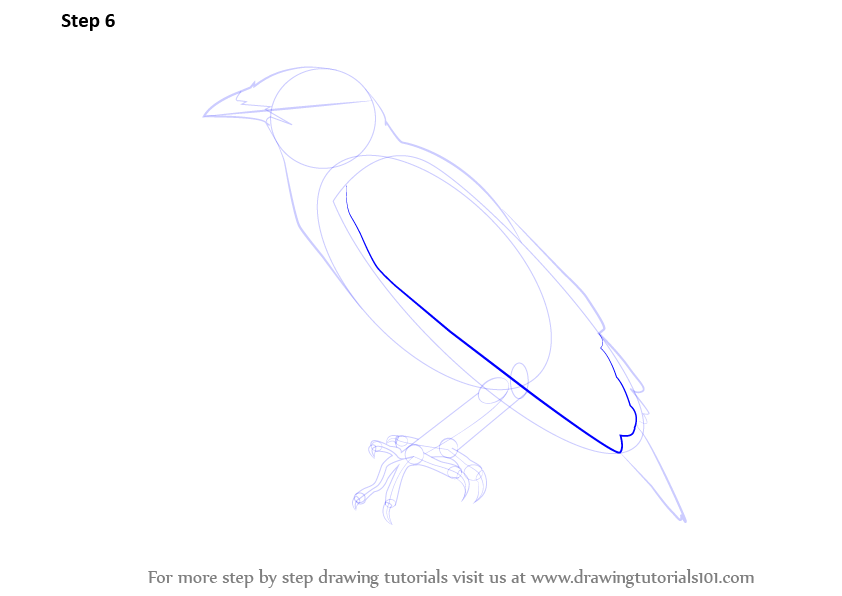 myna bird coloring pages - photo#23