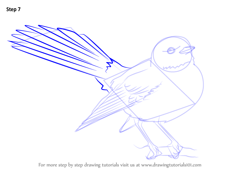 Learn how to draw new zealand fantail birds step by step for How to make doodle art
