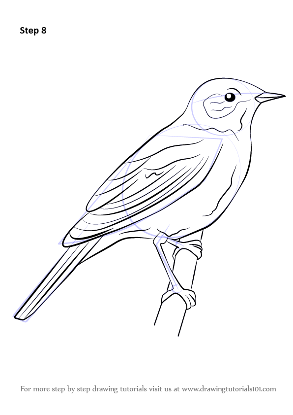 Line Drawing Of Animals And Birds : Learn how to draw a nightingale birds step by