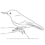 How to Draw a Nuthatch