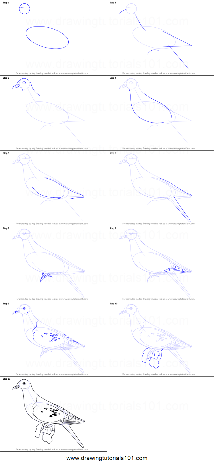 How to Draw a Passenger Pigeon printable step by step drawing