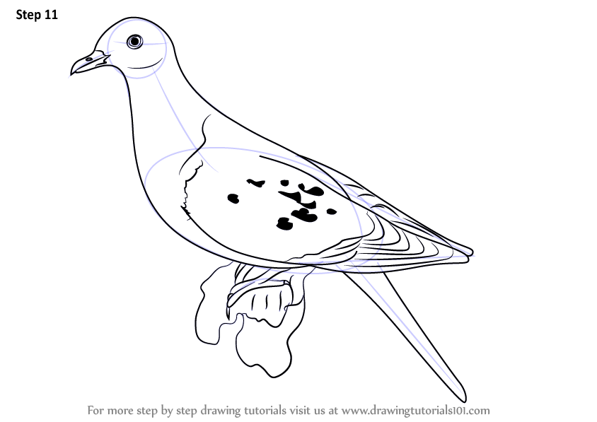 Learn How To Draw A Passenger Pigeon Birds Step By Step Drawing