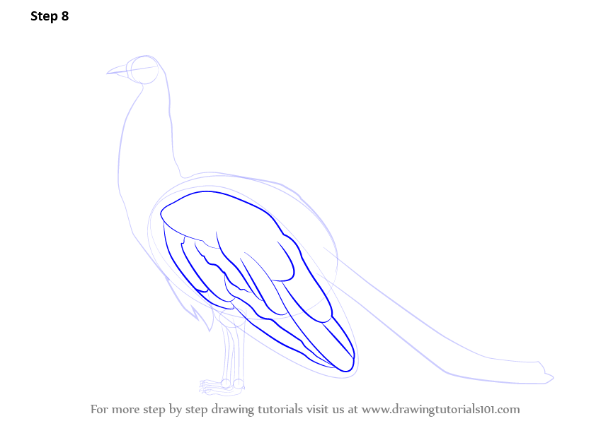 Step by Step How to Draw a Peacock : DrawingTutorials101.com