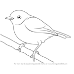 How to Draw a Pied Flycatcher