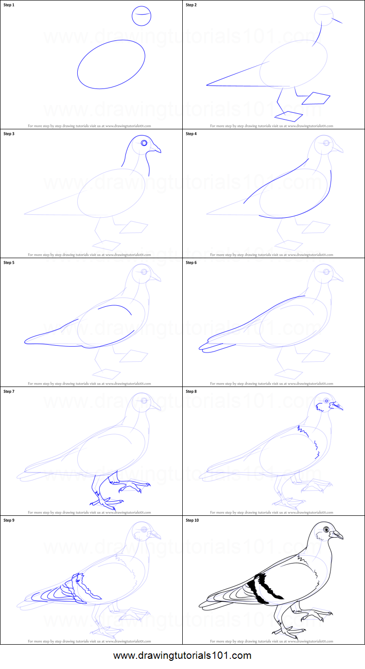How to Draw a Pigeon printable step by step drawing sheet