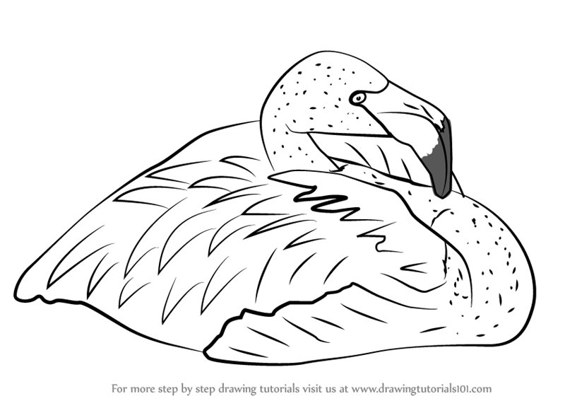 Learn How To Draw A Pink Flamingo Birds Step By Step Drawing