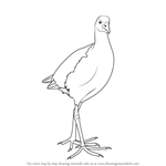 How to Draw a Pukeko