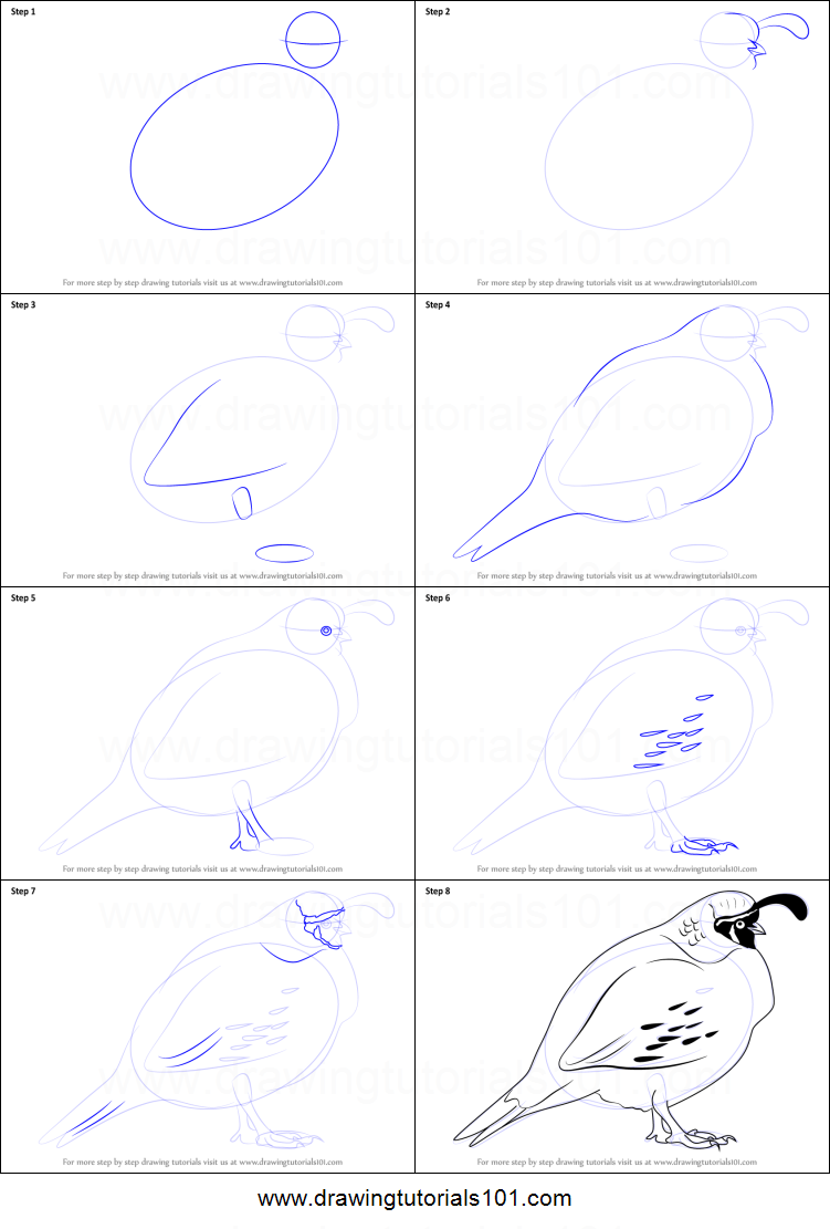 How to Draw a Quail printable step by step drawing sheet ...