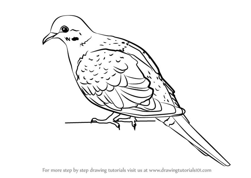 Learn How to Draw a Rain Dove (Birds) Step by Step ...