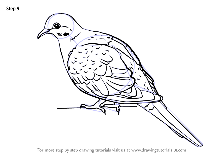 Learn How To Draw A Rain Dove Birds Step By Step