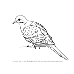 How to Draw a Rain Dove