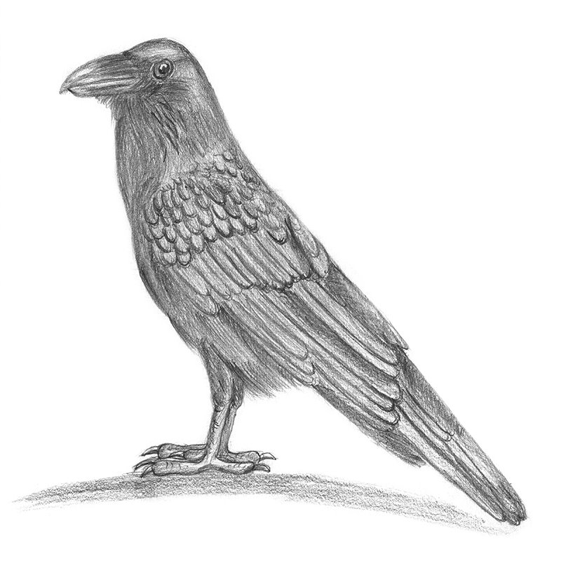 Image result for the raven pencil sketch