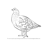 How to Draw a Red Grouse