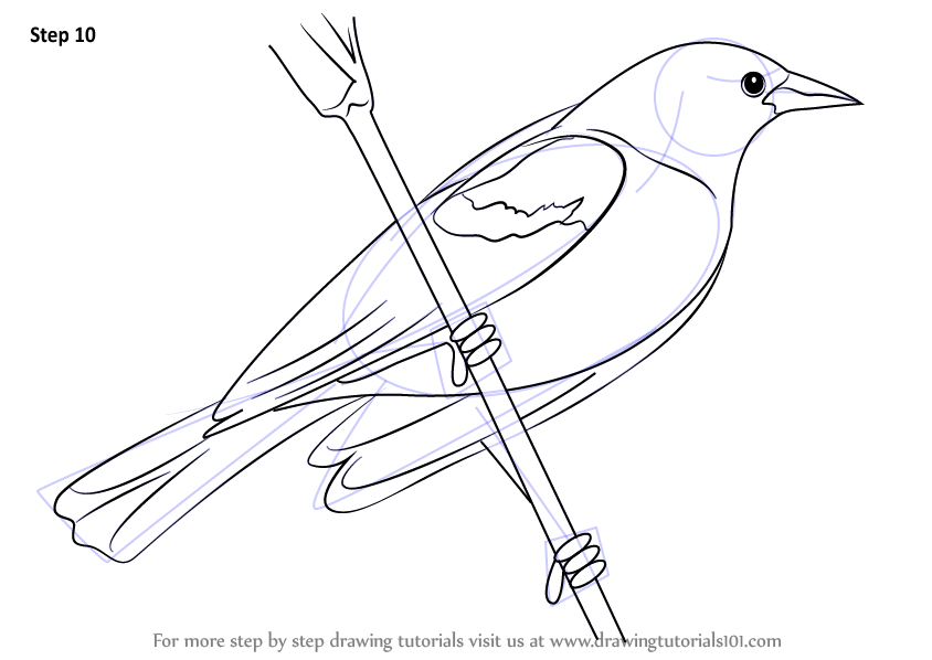 red winged blackbird coloring pages - photo#3