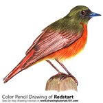 How to Draw a Redstart