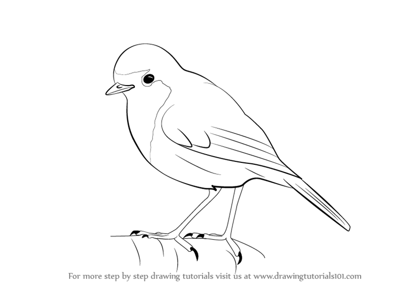 Learn How to Draw a Robin (Birds) Step by Step : Drawing ...