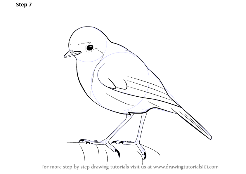 Line Drawing Robin : Learn how to draw a robin birds step by drawing