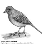 How to Draw a Robin