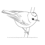 How to Draw a Ruby-Crowned Kinglet