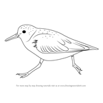 How to Draw a Sanderling