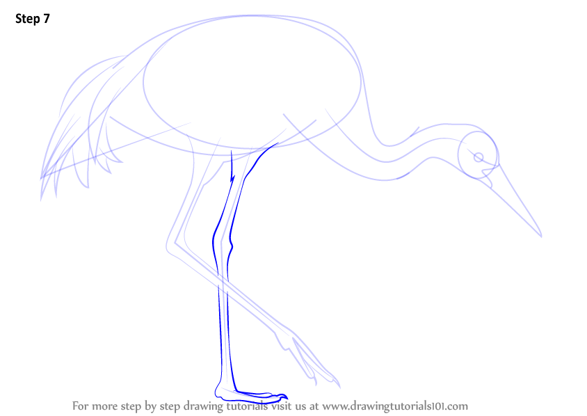 Learn How to Draw a Sandhill Crane (Birds) Step by Step ...