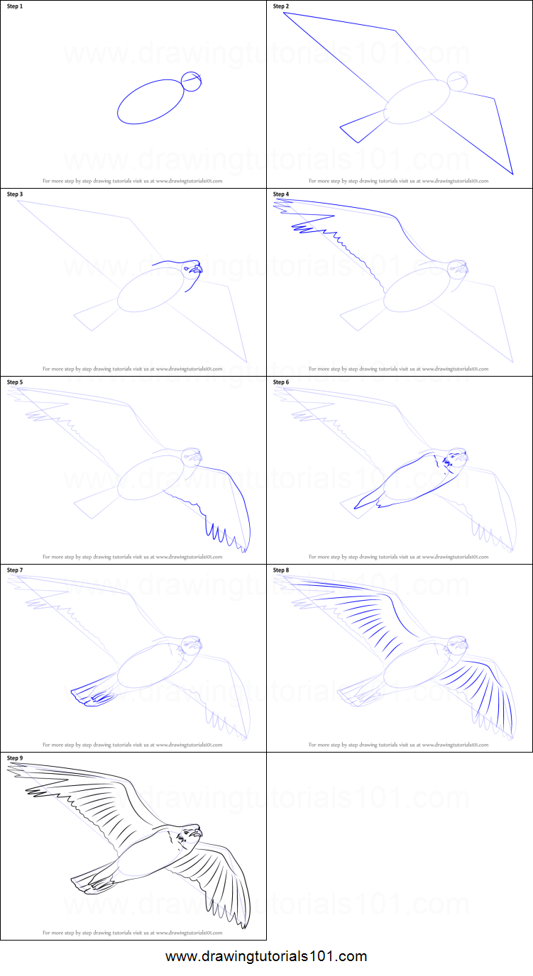 how to draw a seagull flying printable step by step drawing sheet drawingtutorials101com