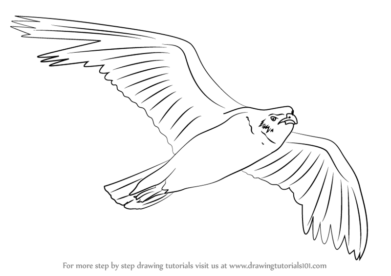 learn how to draw a seagull flying birds step by step drawing tutorials