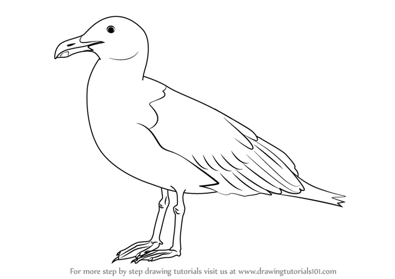 learn how to draw a seagull birds step by step drawing tutorials