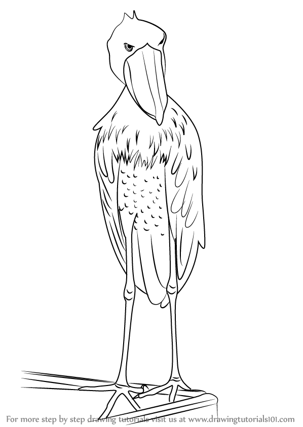 learn how to draw a shoebill  birds  step by step