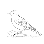 How to Draw a Skylark