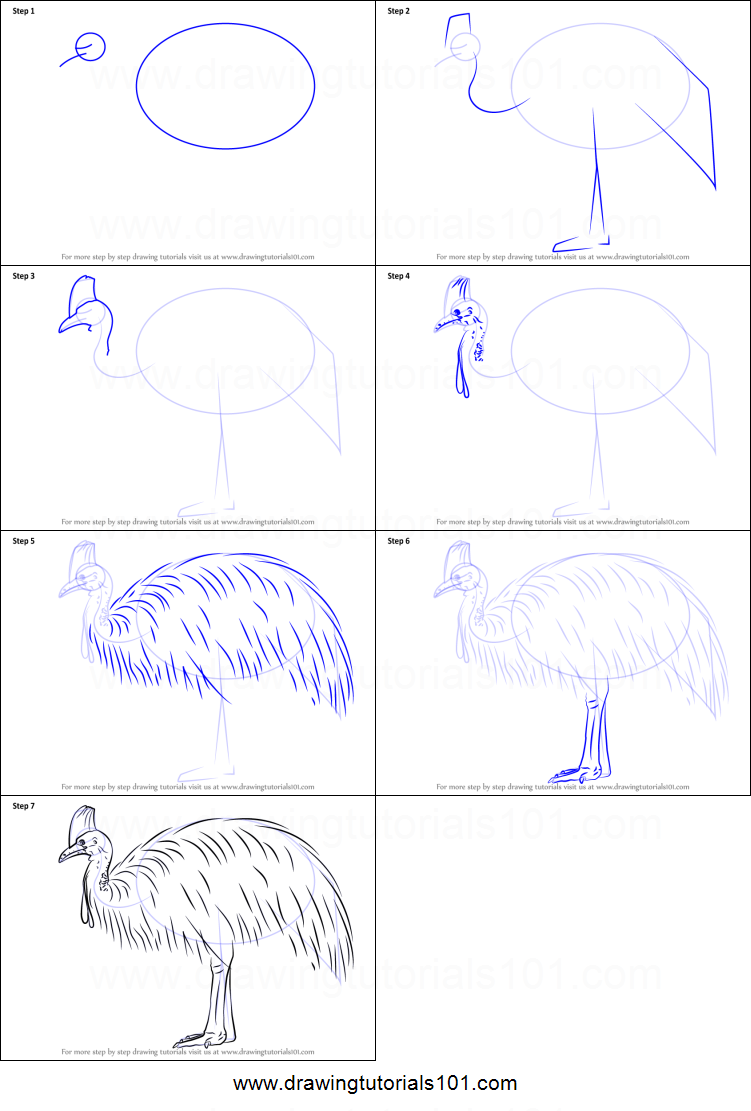 cassowary coloring pages - photo#24
