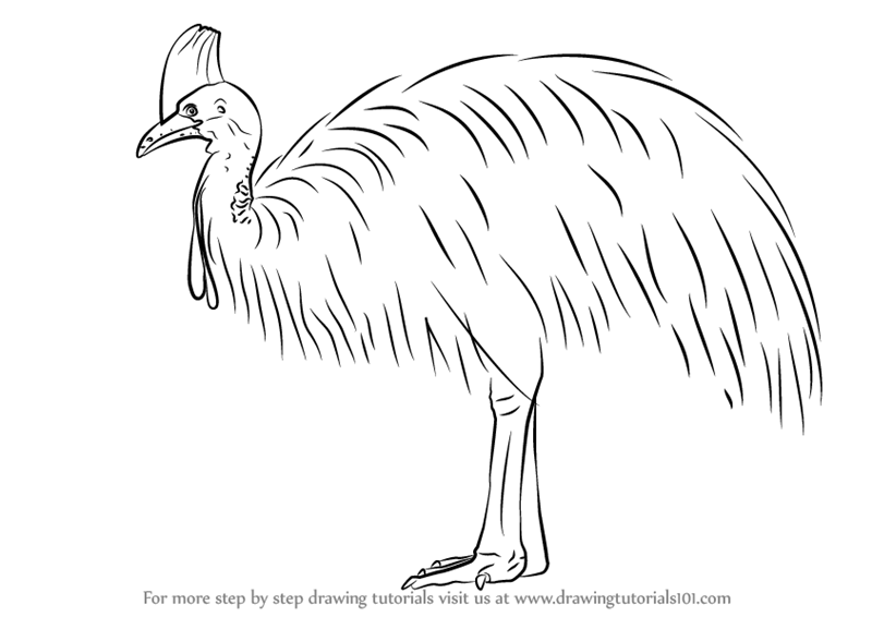 Learn How to Draw a Southern Cassowary (Birds) Step by