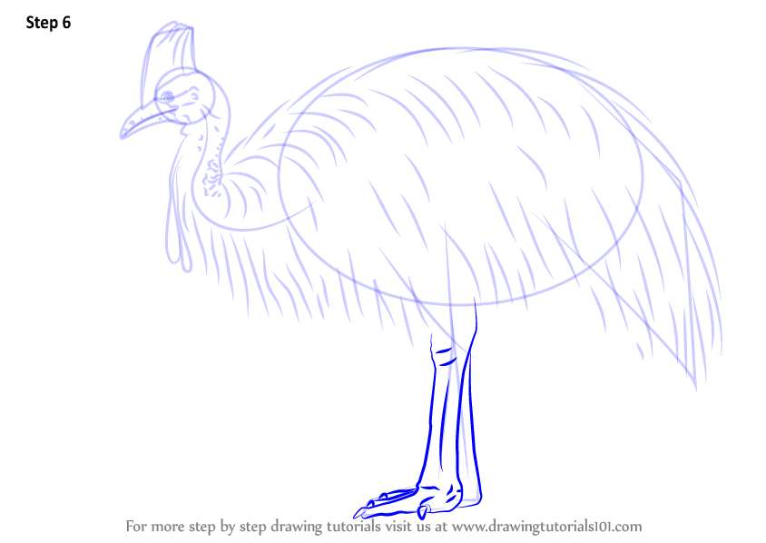 cassowary coloring pages - photo#20